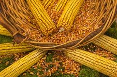 玉米篮子 库存图片