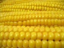 玉米纹理 免版税库存照片