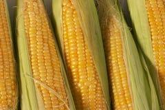 玉米纹理 免版税库存图片