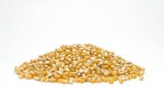 玉米花种子 库存图片