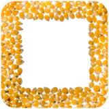 玉米花仁正方形框架 免版税库存照片