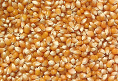 玉米花 库存图片