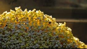 玉米花 图库摄影
