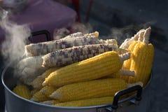 玉米蒸了 库存照片