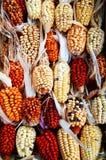 玉米装饰 库存照片