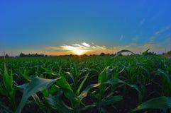玉米计划 免版税库存照片