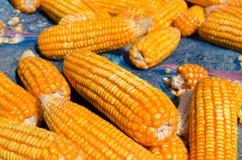 玉米谷物 免版税库存照片