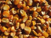玉米豆背景 免版税库存照片