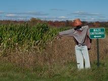 玉米迷宫在国家 免版税库存图片