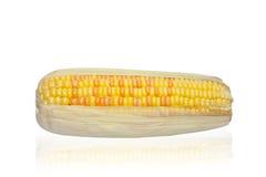 玉米隔离 免版税库存照片