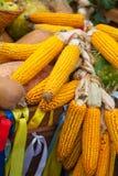 玉米静物画 免版税图库摄影