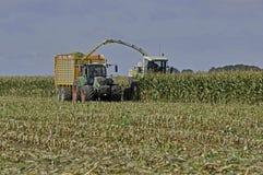 玉米领域收获 免版税库存图片