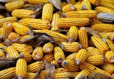 玉米黄色 免版税库存照片