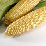 玉米黄色 图库摄影