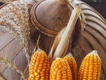 玉米,三个耳朵部分地剥壳有帽子背景 免版税图库摄影