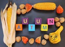 玉米,南瓜,核桃,在黑背景的灯笼果秋天框架  免版税库存图片