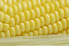 玉米,有机健康食物 免版税库存照片