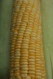 玉米,被关闭在玉米棒子和果皮 库存图片