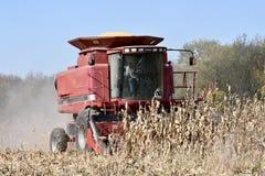 玉米组合 免版税库存图片