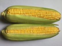 玉米 对玉米棒 库存照片