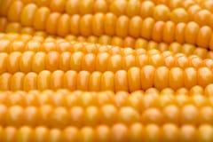 玉米& x28; 玉蜀黍属mays& x29;特写镜头 免版税库存图片