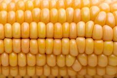 玉米& x28; 玉蜀黍属mays& x29;特写镜头 免版税库存照片