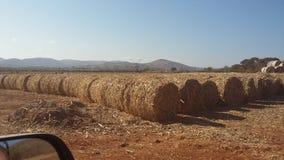 玉米1 库存照片