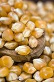 玉米5月玉蜀黍属 免版税库存照片