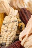 玉米indianm 免版税图库摄影