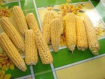 玉米Sakharnaya,也mais拉特 Zéa mà ¡ ys -每年草本栽培植物,类的唯一的文化代表 图库摄影