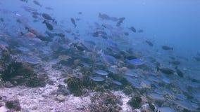 王侯Ampat印度尼西亚五颜六色的珊瑚礁4k 股票录像