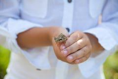 王子青蛙青蛙在孩子的手上 免版税库存图片