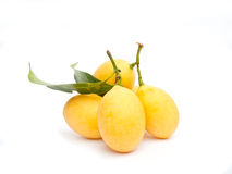 玛丽亚李子果子 免版税库存照片