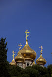 玛丽亚从良的妓女教会在树之中的 免版税库存图片