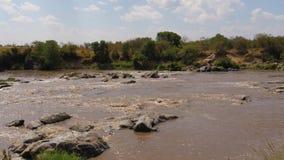 玛拉河的急流的看法用布朗水在非洲 影视素材