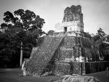 玛雅废墟在蒂卡尔,危地马拉 免版税库存图片