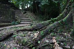 玛雅废墟在Palenque 库存图片