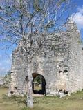 玛雅废墟结构树 免版税库存图片