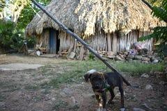 玛雅房子的监护人 库存图片