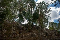玛雅金字塔废墟在密林的 科巴 墨西哥,尤加坦 免版税图库摄影