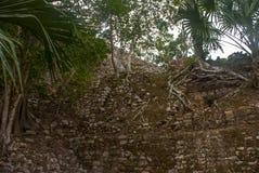 玛雅金字塔废墟在密林的 科巴 墨西哥,尤加坦 图库摄影
