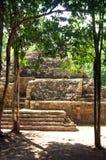 玛雅金字塔,科巴,墨西哥 库存照片