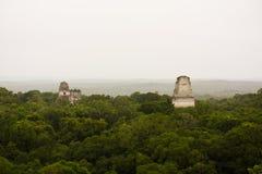 玛雅piramides在密林或丛林地带在蒂卡尔贝登危地马拉 库存照片