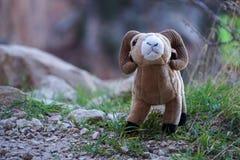 玩具与大垫铁的大角野绵羊公羊在大峡谷峭壁 免版税库存图片