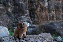 玩具与大垫铁的大角野绵羊公羊在大峡谷峭壁 免版税库存照片
