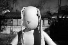 玩具兔子的画象 免版税库存图片