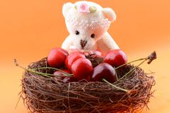 玩具收集甜樱桃的玩具熊 库存图片