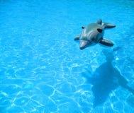 玩具橡胶海豚 免版税图库摄影