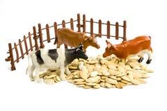 玩具母牛和种子 免版税库存照片