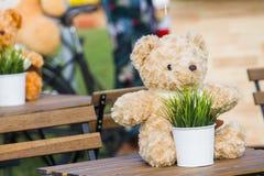 玩具熊和草在罐和白色 投入它在桌作为背景 库存照片